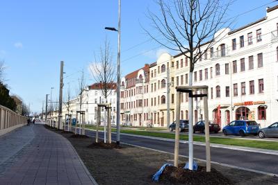Baumallee in der Raiffeisenstraße