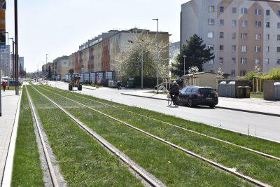 Grüne Gleise entlang der Johannes-R.-Becher-Straße.